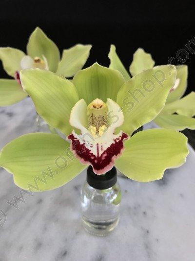 Glazen orchideeen Vaasje  (Voor een bloem)