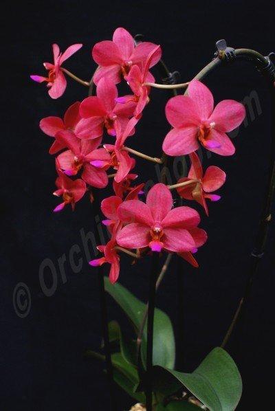 1 bloemtak