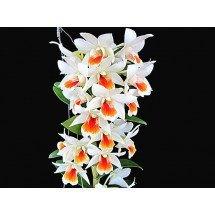 Dendrobium Rungkamol 'Big'