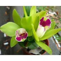 Blc. Chief Green River
