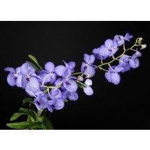 voorbeeld foto deze bloeit met een bloemtak