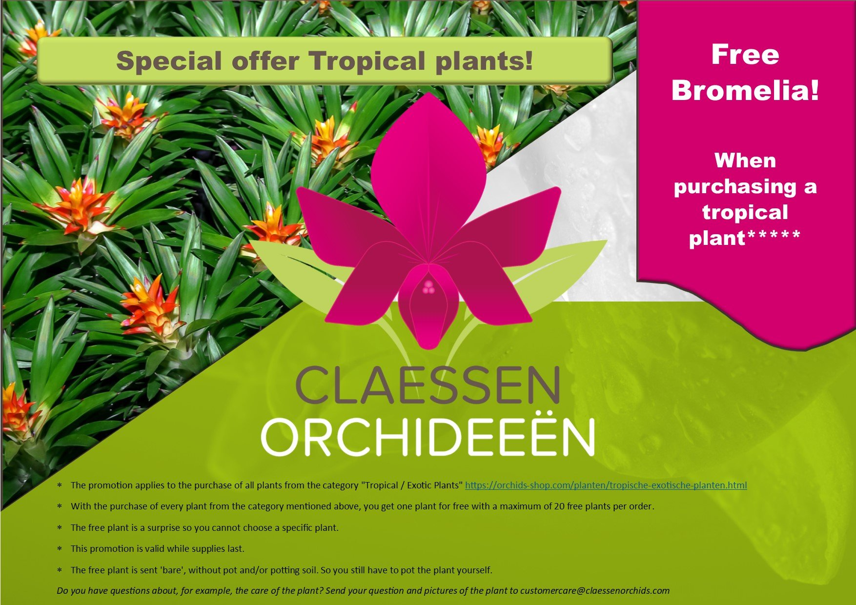 Special offer Tropical plants