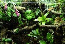 Terrarium Planten en Orchideeën